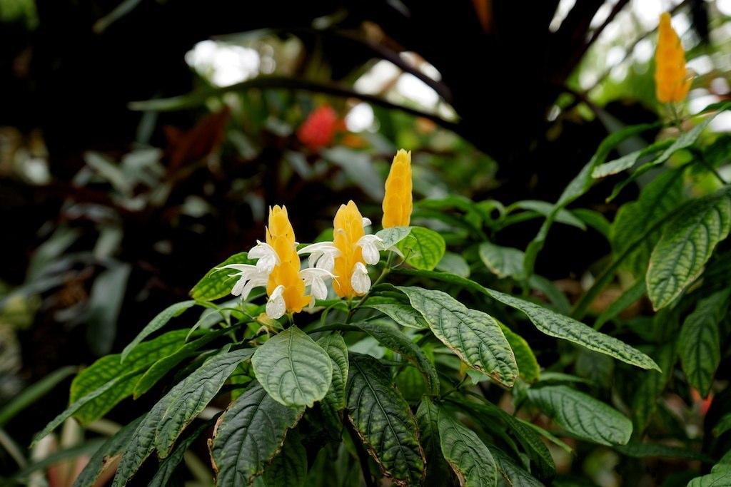Photos des plantes et fleurs des serres du jardins for Plantes fleurs et jardins