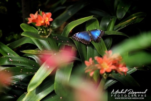 S ance photo de maternit papillons en libert et serre for Papillons jardin botanique 2016