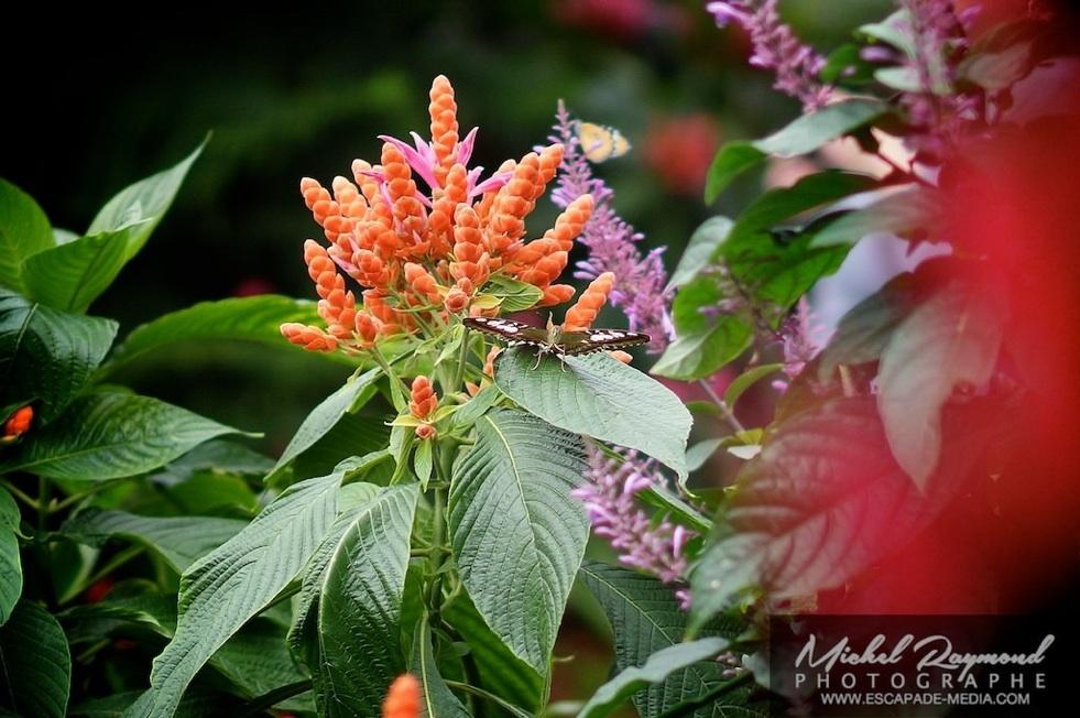 Photos et vid o des papillons en libert 2015 for Papillon jardin botanique 2015